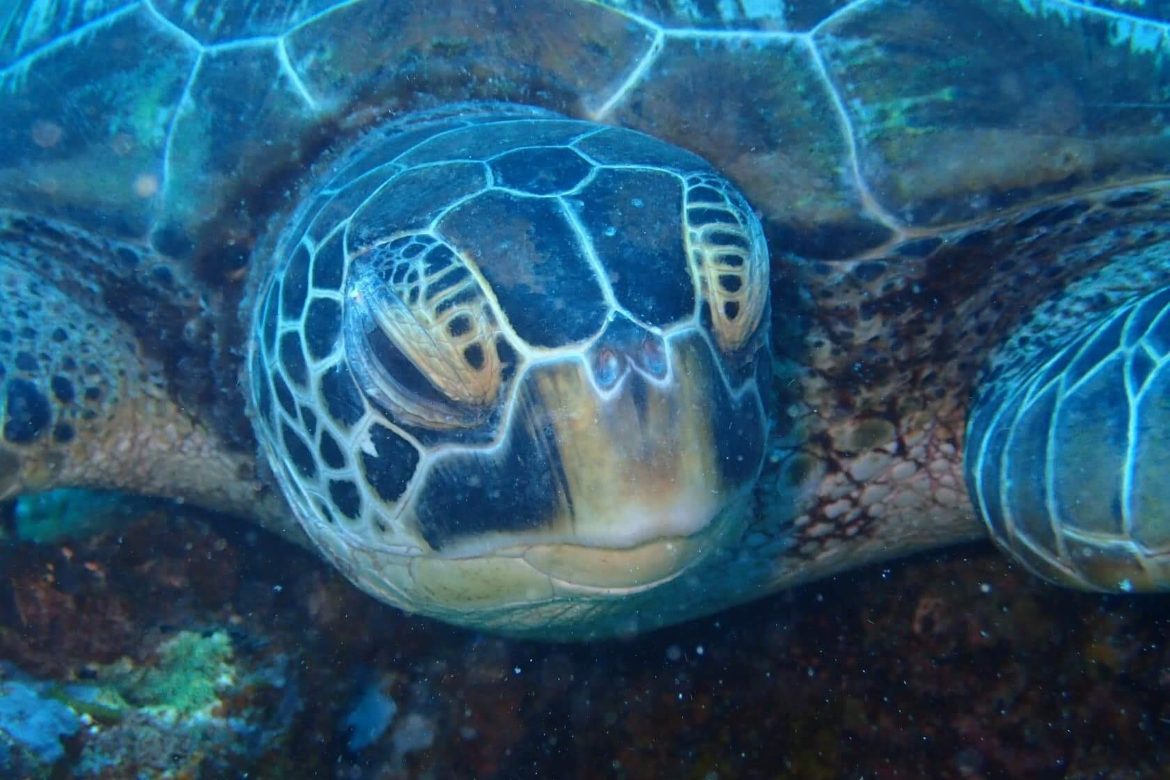 http://blog.cebu-oh.com/local/2018/08/photo/GoodDive_Turtle.JPG